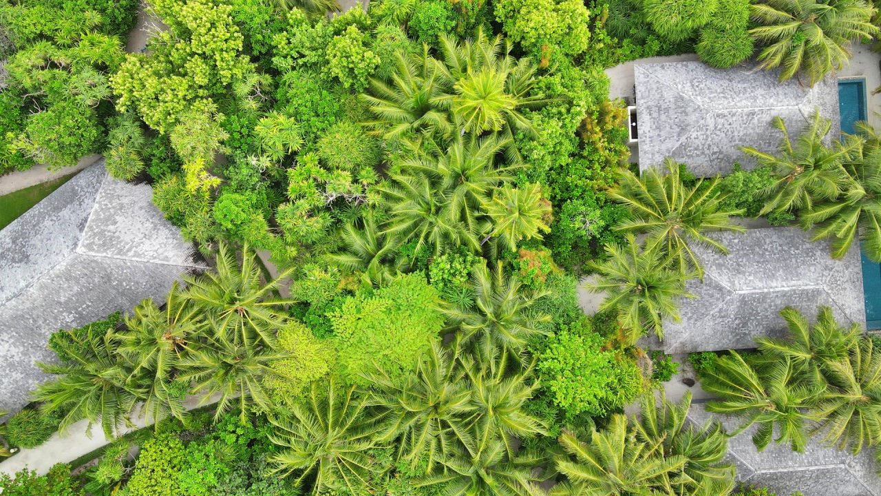 The_Residence_Maldives_Palm_tree