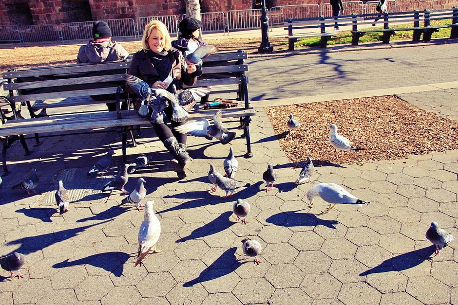 码头鸽子Pigeons_at_wharf